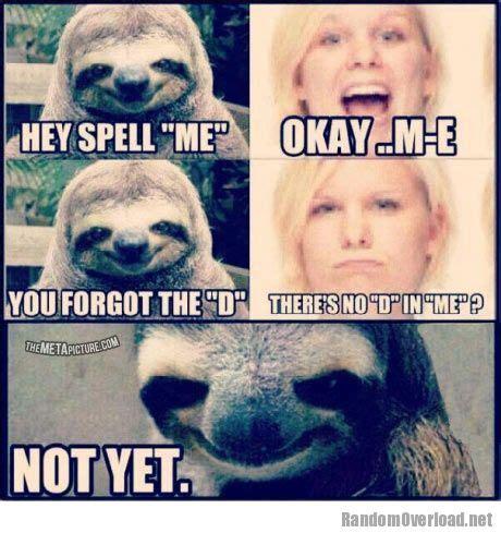 Spell Me Meme - spell me randomoverload
