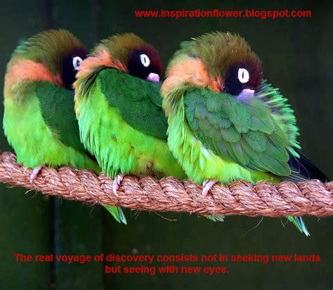inspirational quotes  birds quotesgram