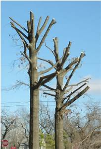 An Example Of Improper Pruning Methods  These Trees Were