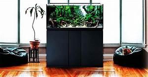 Aquarium Design  U00e9pur U00e9