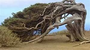 Amazing Trees - Unusual Trees from around the World - YouTube
