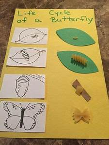 Pasta Life Cycle of a Butterfly Craft Using pasta ...