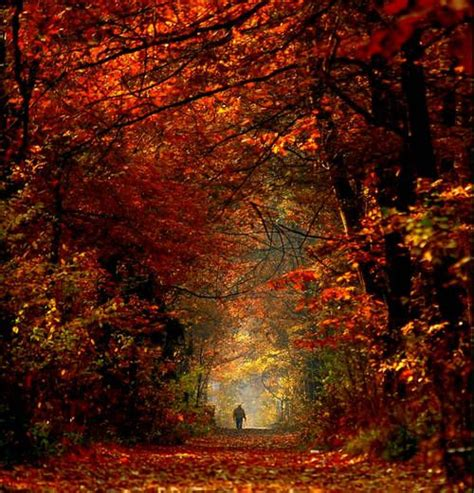 Breathtaking Beauty Embrace Autumn Pinterest