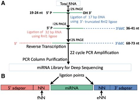Illumina Sequencing Protocol by The Protocol For Preparing Sles For Small Rna