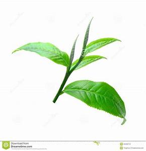 Tea Leaves With White Background Stock Photo - Image of ...