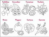 Coloring Vegetable Garden Pages Sheets Printable sketch template