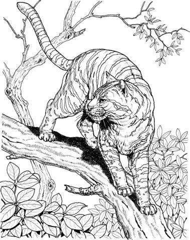 tiger   jungle coloring page supercoloringcom