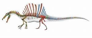 The New Spinosaurus – Phenomena