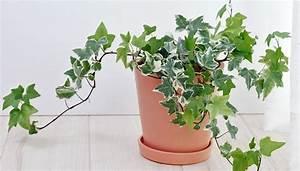 Efeu Als Zimmerpflanze : pflanzen im schlafzimmer die top 6 f r gesunde nachtruhe ~ Indierocktalk.com Haus und Dekorationen