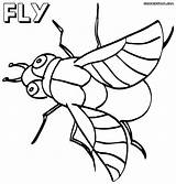 Fly Coloring Pages Print sketch template