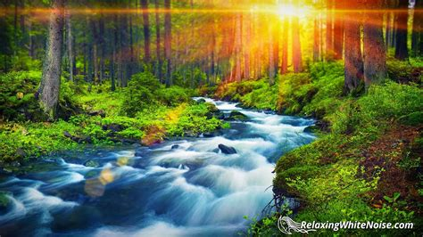 Forest River Peaceful Sounds For Relaxation, Sleep Or