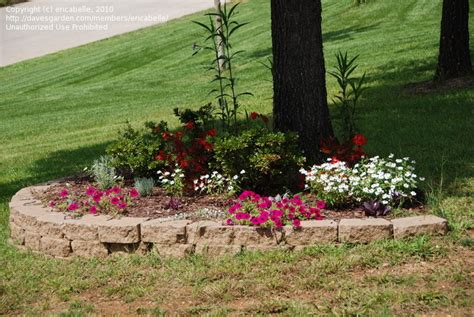 small flower bed trees dyi on pinterest flower beds weed killers and landscape around trees