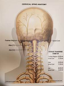 Laminated Cervical Spine Anatomy Poster
