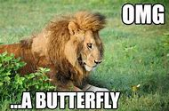Lion Funny Animal Pictures with Quotes