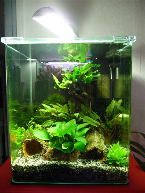 nano cube 30 litres c 244 t 233 jardin