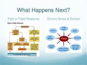 The Autonomic Nervous System And Yoga