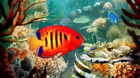 3d Animal Wallpaper 3d Fish Wallpaper - tropical fish wallpapers wallpaper cave