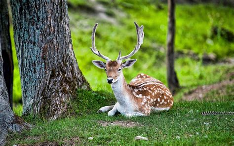 Amazing Beautiful Deer Seating in Jungle Image | HD Wallpapers
