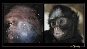 Astro Anarchy: A new image, NGC 2174, the Monkey Head Nebula