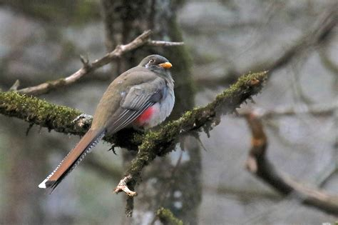 Rare Bird Alert  Travis Audubon
