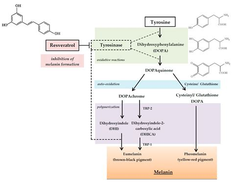 IJMS | Free Full-Text | The Potential of Plant Phenolics