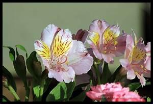 Skills For Good Customer Service Aloha Florist Sacramento