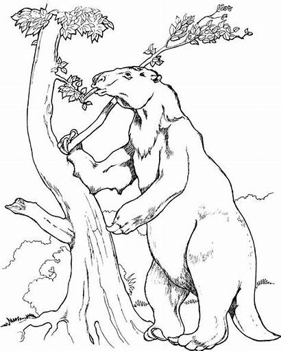 Sloth Ground Giant Prehistoric Coloring Pages Animals