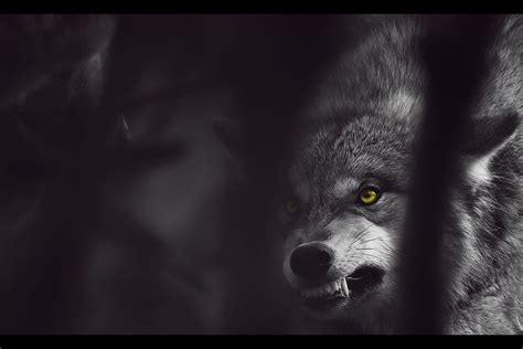 Angry Lone Wolf Wallpaper by Always Talking About Louve Because She Obsessed With