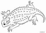 Lizard Coloring Horned Thorny Devil Lizards Printable Texas Cool2bkids Toad Drawing Desert Drawings Line Designlooter Sketch 170px 96kb sketch template