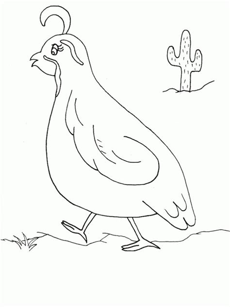 Quail Coloring Page California Quail Coloring Page Sketch Coloring Page