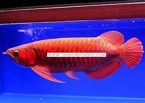 Fische Aquarium Hamburg : kostenlose kleinanzeigen kaufen und verkaufen ber ~ Lizthompson.info Haus und Dekorationen