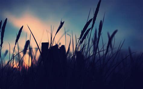 Nature, Landscape, Night, Macro Wallpapers Hd / Desktop