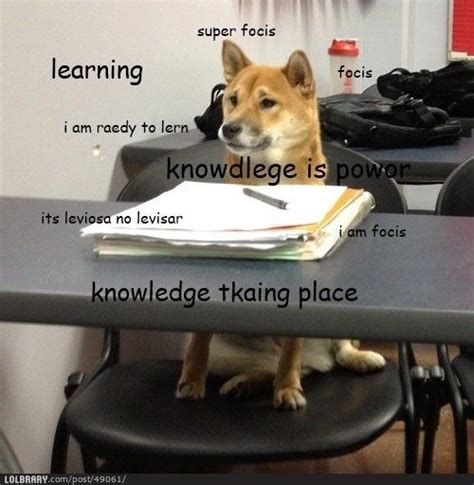 Doge Meme Shiba - learning doge school pinterest learning and doge
