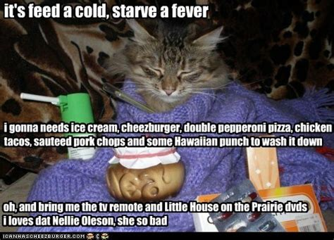 top  mistakes people    cats