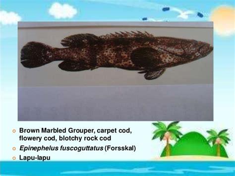 grouper hatchery technology coloides cod