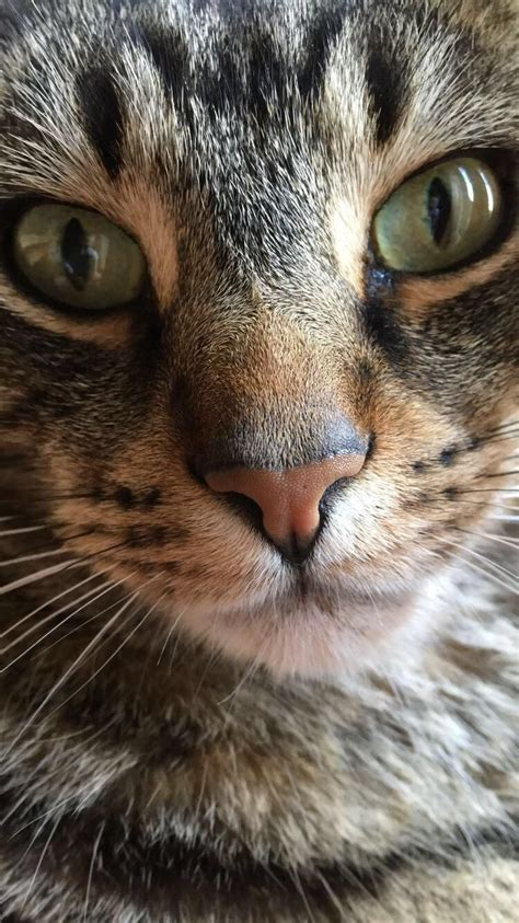 cats purr pretty meowmoe meow