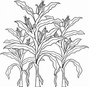 field with crops coloring pages corn stalks fall page for With corn stalk template