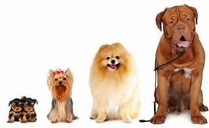 Más de 500 increíbles nombres para perros hembra - Mascotafiel