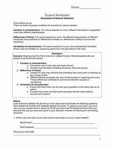 Evolution Scenarios Worksheet Answer Key
