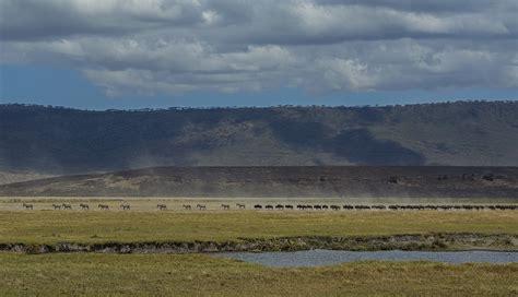 tanzanian safari nick ashdown photographer