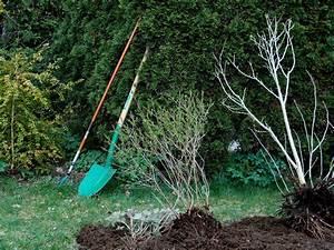 Quand Planter Un Pommier : quand planter les arbres du jardin quelques conseils ~ Dallasstarsshop.com Idées de Décoration