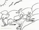 Wallaby Template Sketch sketch template
