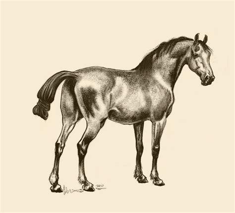 images  horse  art  pinterest arabian