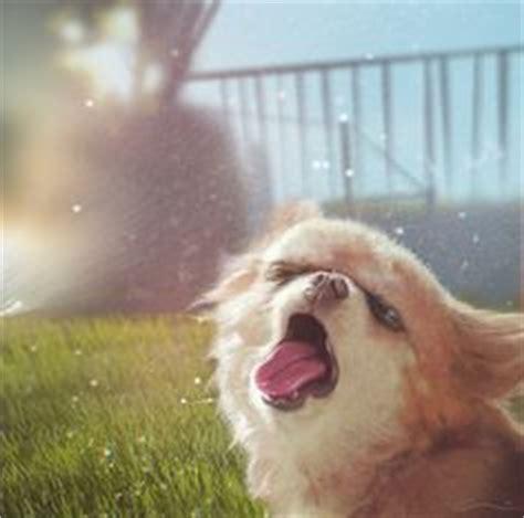 Dog Sprinkler Meme - 1000 images about silly sprinkler pets on pinterest sprinklers grasses and lawn