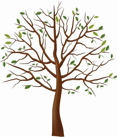 Tree Clipart Clipground