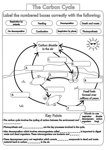 gcse biology carbon cycle worksheets and a3 wall posters updated ws carbon cycle biology