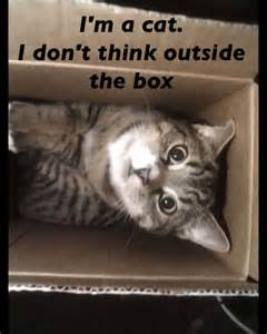 Cats Don't Think Outside the Box