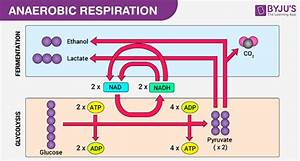 Balanced Chemical Equation For Anaerobic Respiration In