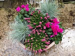 Blumenkübel Bepflanzen Sommer : zeleni prsti zasaditve na grobovih ~ Eleganceandgraceweddings.com Haus und Dekorationen