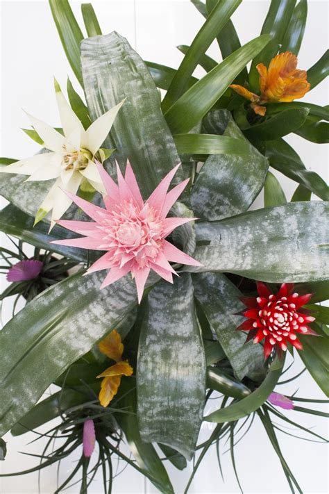 Littlebigbell Tropical Plants And A Diy Plant Shelf